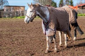 Pferdedecken waschen – so einfach geht's