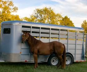 5 Tipps zum Reisen mit dem Pferd - inkl. Tipps zu Pferdeanhängern