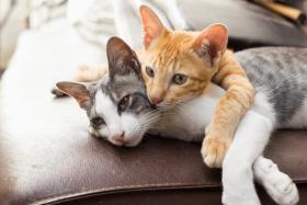 Eine Katze alleine halten – geht das?