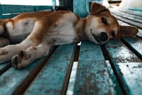 Hüftprobleme bei Hunden - Symptome und Prävention