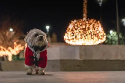 christmas_dog1