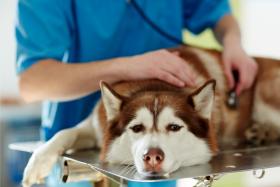 Hundekrankheiten – wenn dein Vierbeiner deine Hilfe braucht
