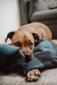 Magenprobleme bei Hunden erkennen und behandeln – welche Hausmittel helfen wirklich?