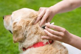 Natürlicher Zeckenschutz für deinen Hund