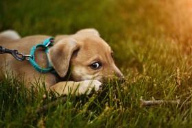 Haustierpflege - das solltest du beachten!