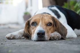 Hund Bauchschmerzen – das musst du wissen