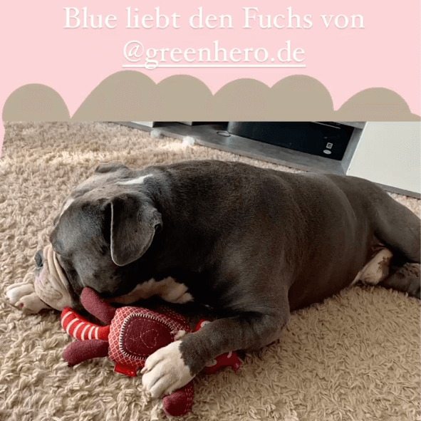 insta_kuscheltier_fuchs_herzensbullys_thumb