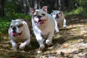 Essentielle Fettsäuren Hund - Fette für die Gesundheit