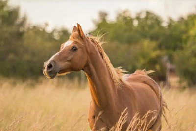 pferdebremsen_greenhero_ratgeber