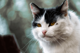 Zeckenbiss Katze