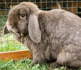 Tipps zur Kaninchenhaltung und der Gestaltung von Außengehegen für Kaninchen