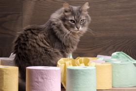Katze Durchfall – so ist deine Samtpfote schnell wieder happy