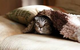 Katzen und Corona – Quarantäne, Beschäftigungen für drinnen und mehr Wissenswertes