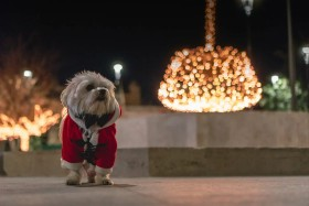 Top 5 Weihnachtsgeschenke für deinen Hund - so wird das Fest auch für Vierbeiner zum Highlight