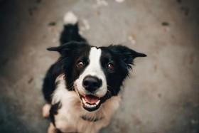 Dorschlebertran für Hunde – Wirkung mit Geschmack